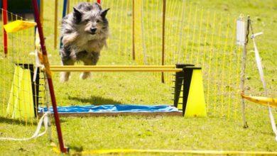 Photo of Tager du din hund med til hundetræning?