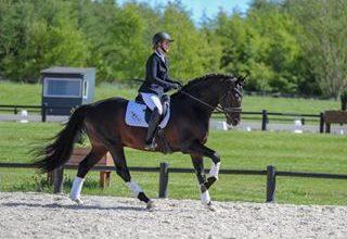 Photo of Giv kun din hest det bedste