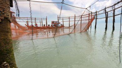 Photo of Forelsket i friheden på det åbne hav