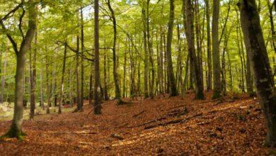 Photo of Storbyen eller en tur ud i skoven?