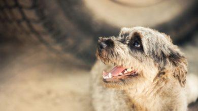 Photo of Masser af lækre hundeartikler online